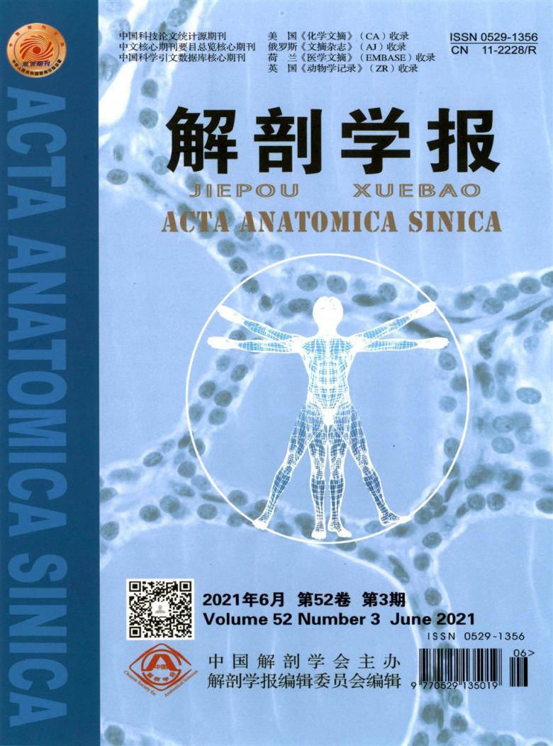 解剖学报杂志