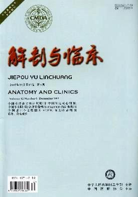 解剖与临床杂志